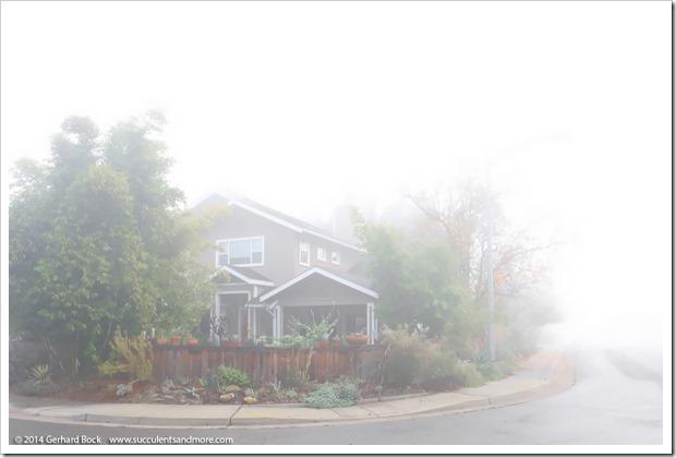 141223_fog_012