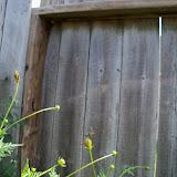 Gardening 2011 - 100_0115.JPG