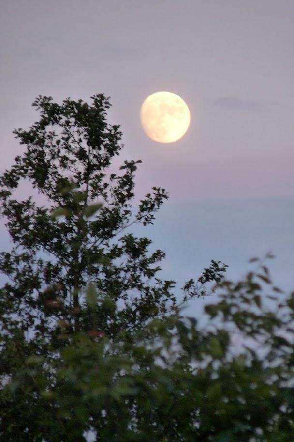 Nacht van Kompas - P1030670.JPG