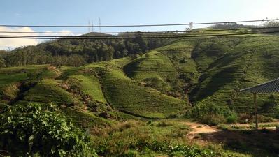 Tea on Hills