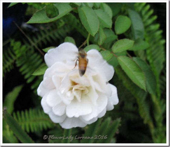 10-11-bee-prosperity2