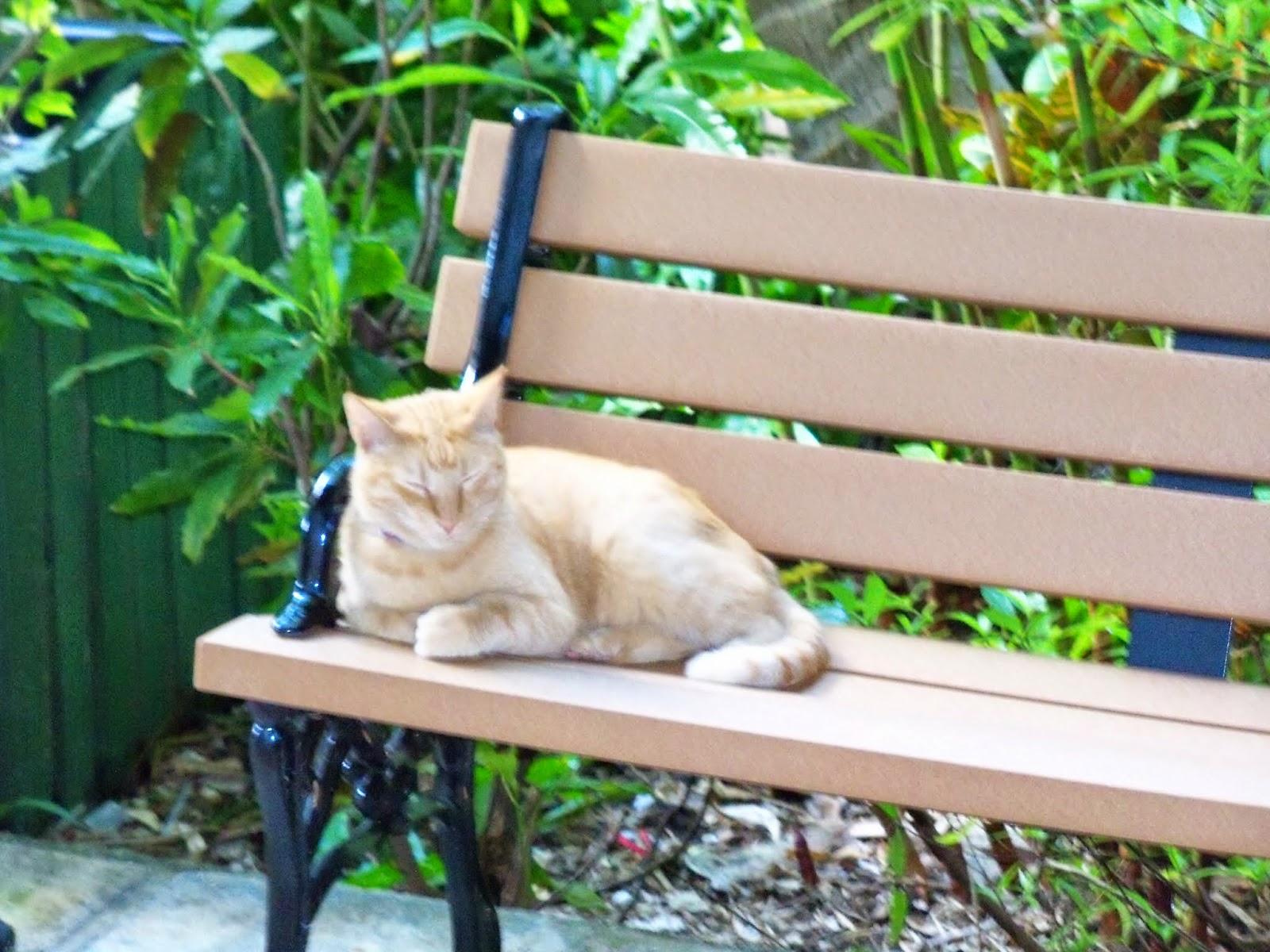 Key West Vacation - 116_5412.JPG