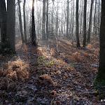 Bois de Vossery : sous-bois