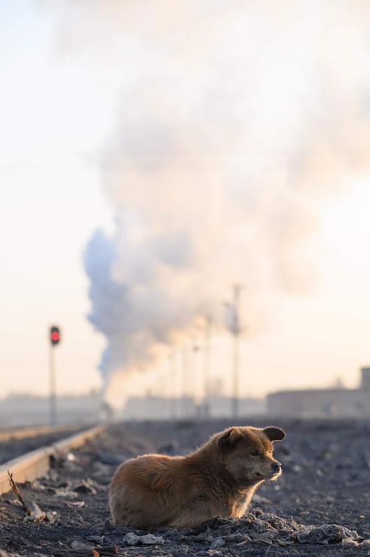 190102 出発していった蒸機と犬