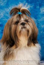 Huisdierreportage Hondendag Uden Dierendag (4 oktober 2008) - 22