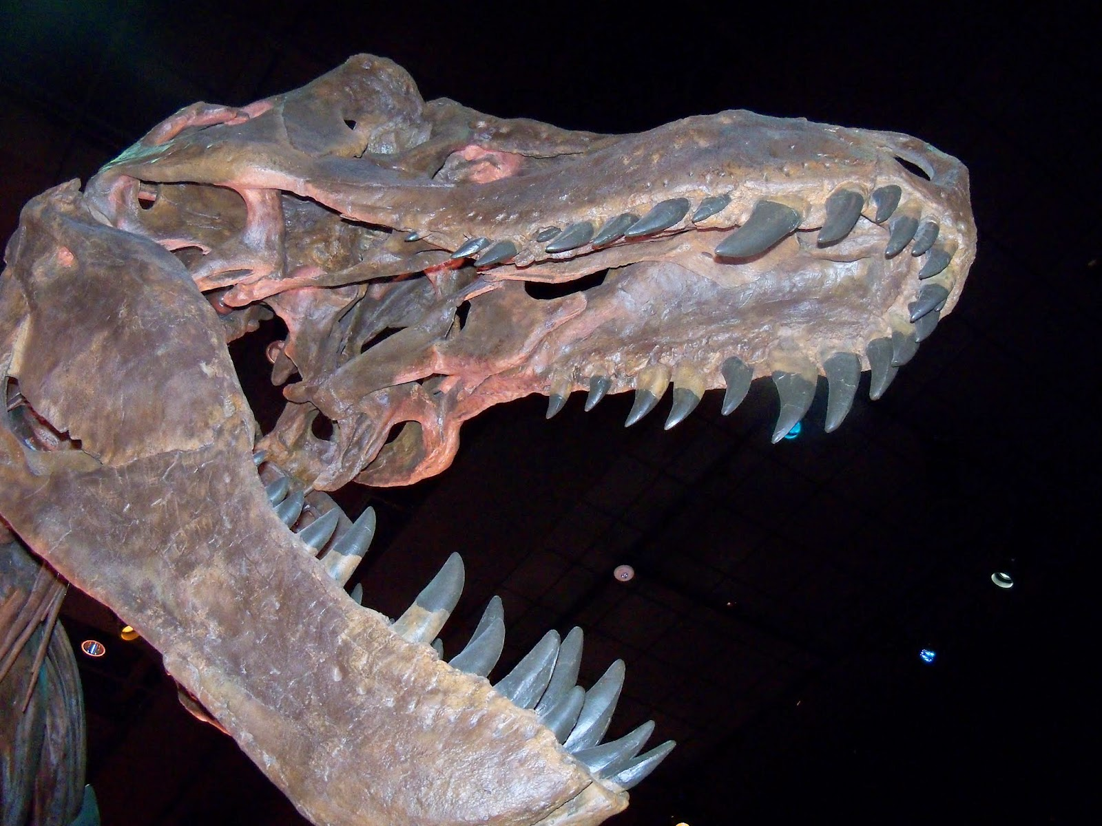 Houston Museum of Natural Science - 116_2666.JPG