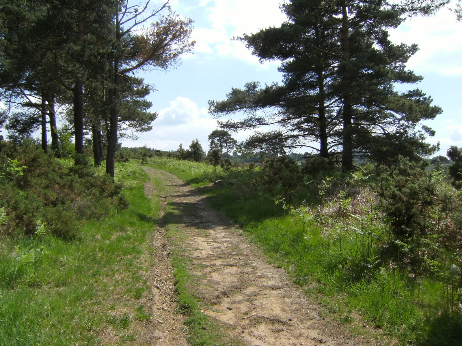 1006120042 Emerging onto Ashdown Forest