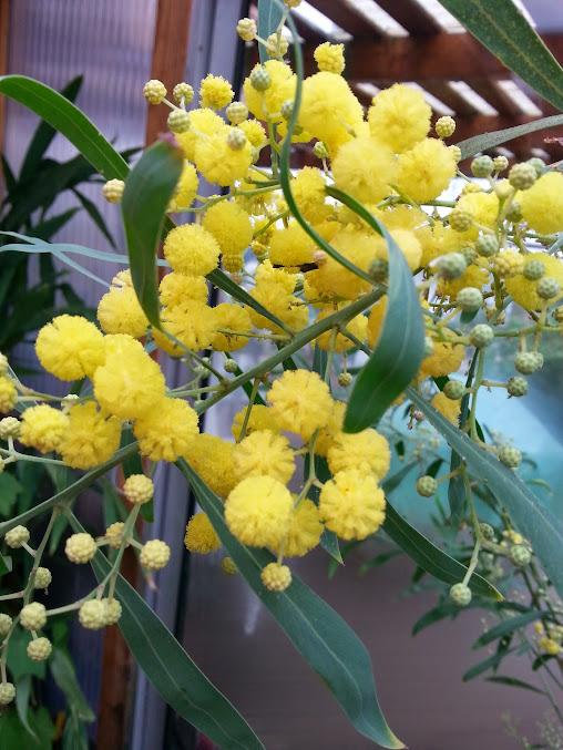 floraisons du mois - Page 3 20140414_112321