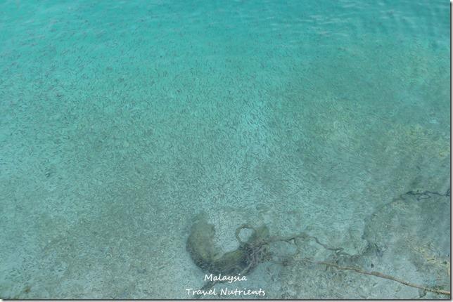 沙巴亞庇馬穆迪島 (45)