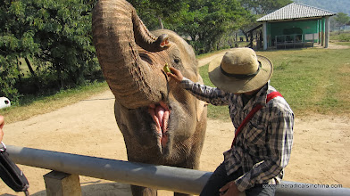 Photo: The park rescues abused and injured elephants. No riding elephants here.