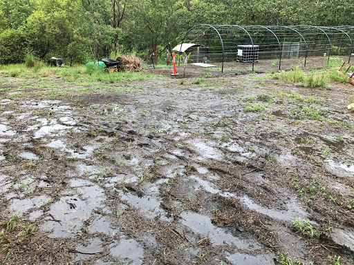2017-03-22-rain-standing-water-2017-03-22-09-18.JPG