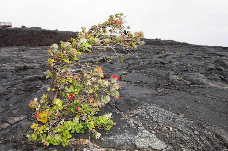 Hawaii 2013 - Best Story-Telling Photos - IMGP8253.JPG