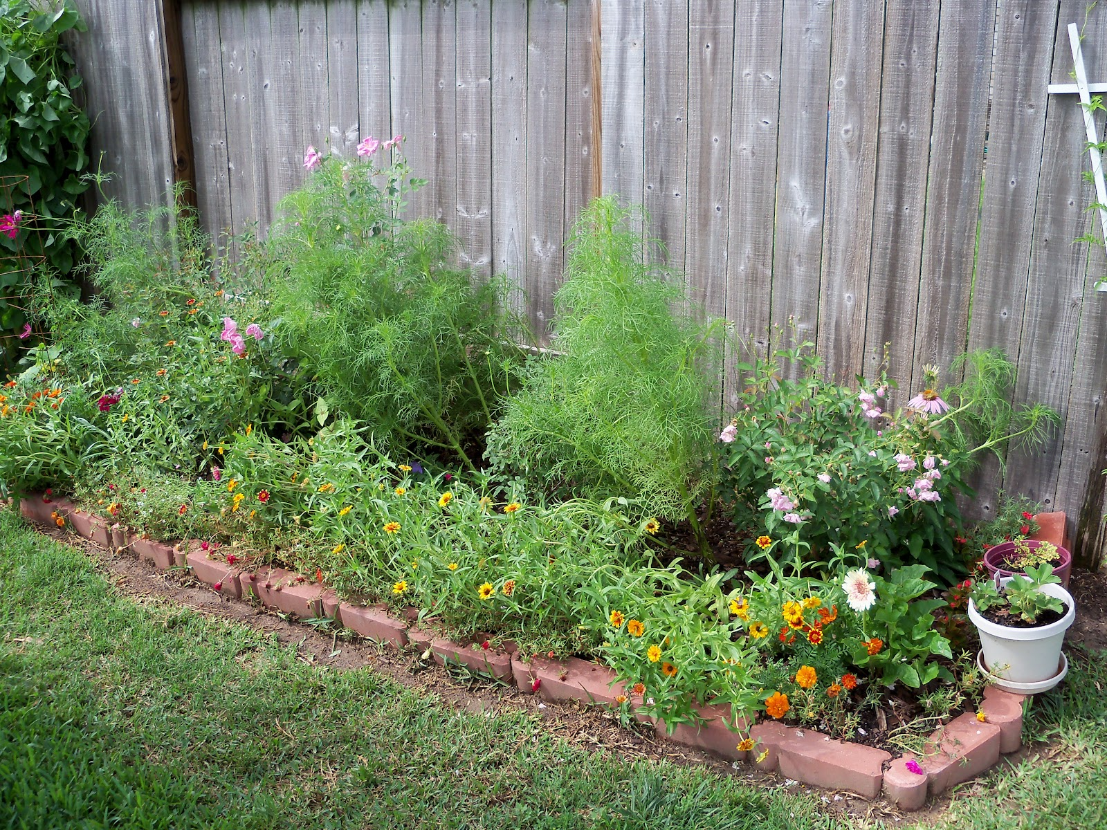 Gardening 2010, Part Three - 101_3638.JPG