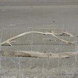 01-19-13 Hagerman Wildlife Preserve and Denison Dam - IMGP4057.JPG