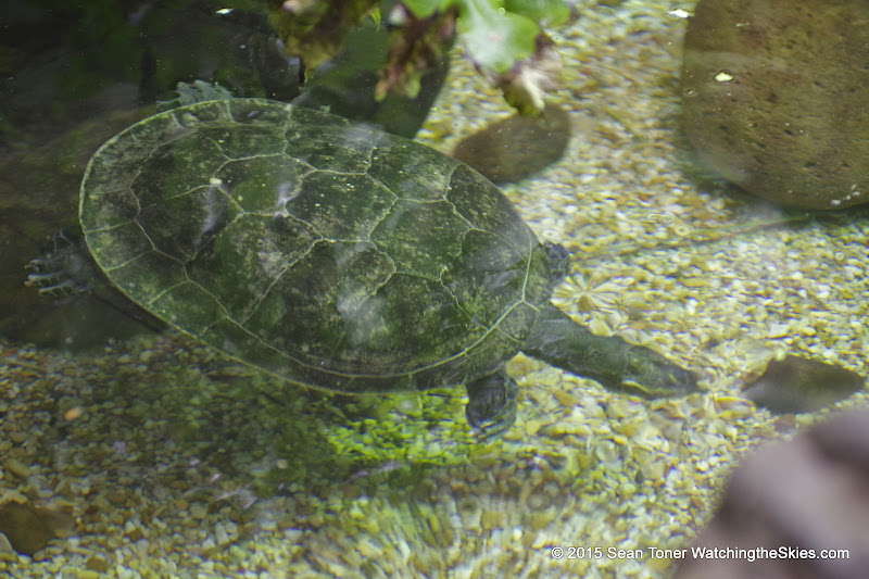 03-11-15 Dallas World Aquarium - _IMG1006.JPG