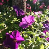 Gardening 2012 - IMG_3154.JPG