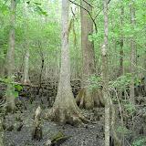 Beidler Forest 008.jpg