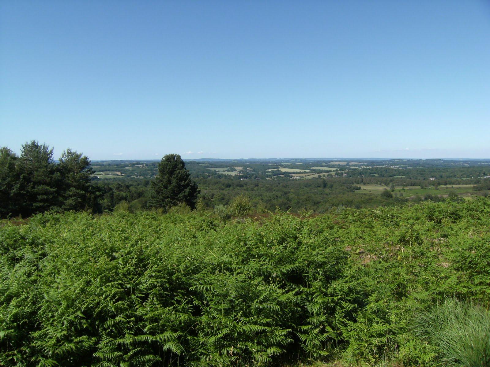 DSCF8741 Ashdown Forest