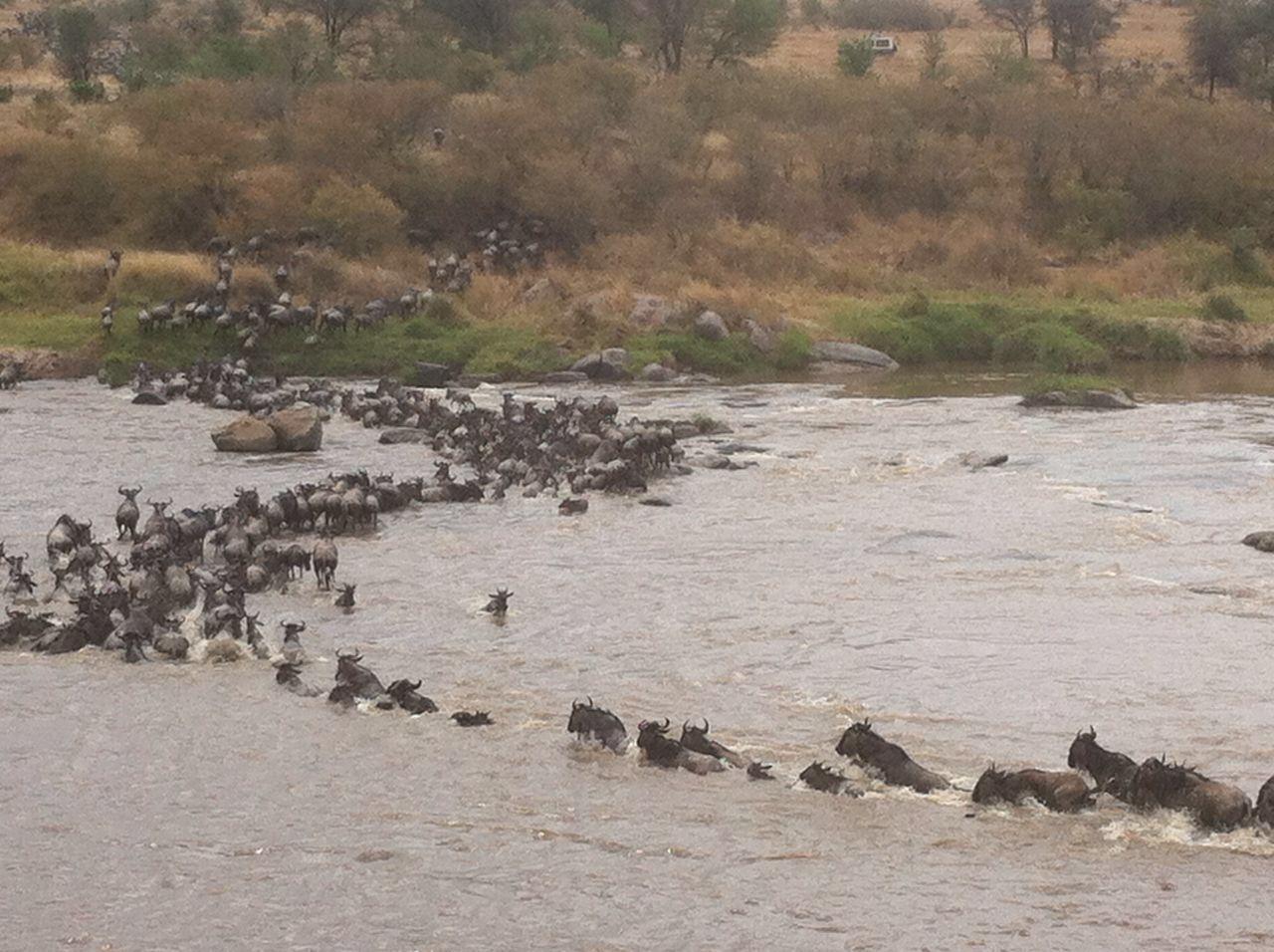 Serengeti Tour Companies