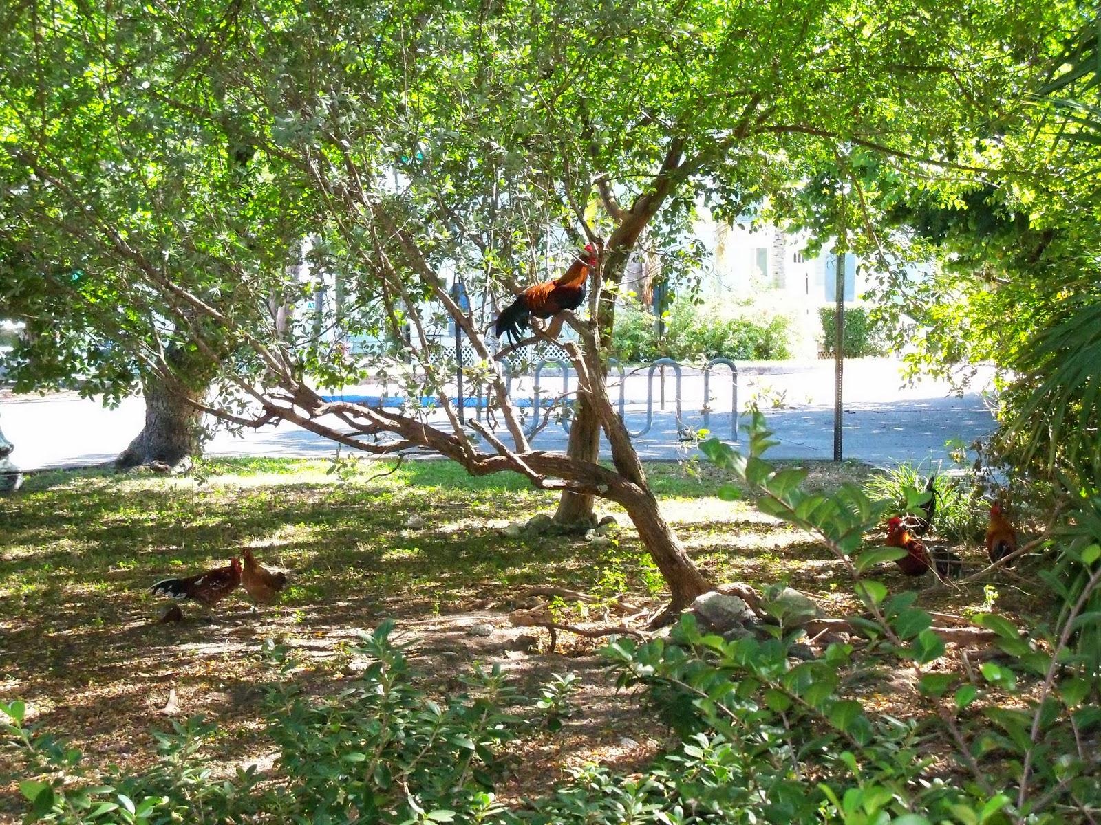 Key West Vacation - 116_5485.JPG