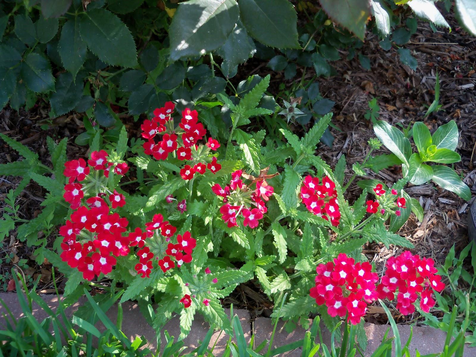 Gardening 2010, Part Two - 101_3089.JPG