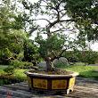 46 veľké tvarované stromy ako súčasť záhrady.JPG