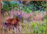 """Backyard Friend 2"" by Susan Marx -- 3d place B General"