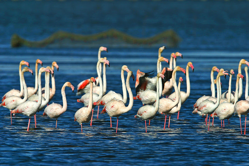 Ebro Delta Natural Park
