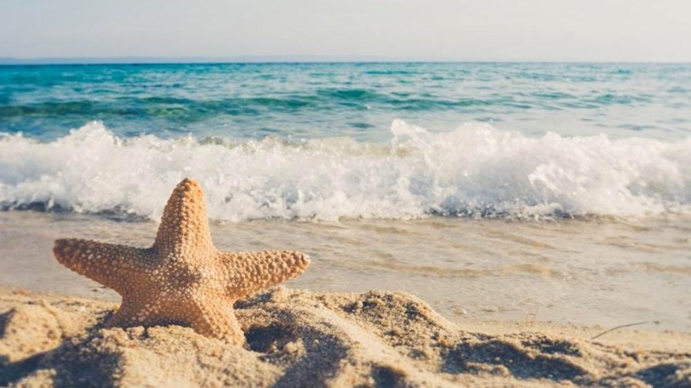 Những vì sao biển