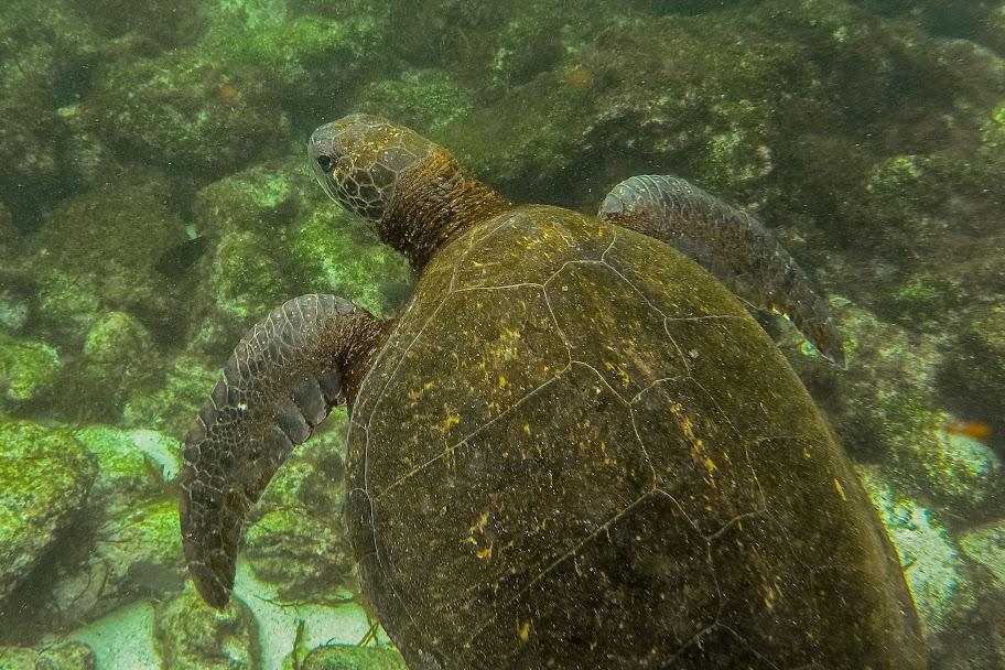 galapagos - Galapagos_FB_2-133.jpg