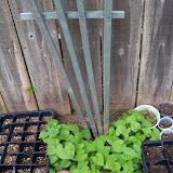 Gardening 2010 - 101_0833.JPG