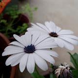 Gardening 2011 - 100_7220.JPG