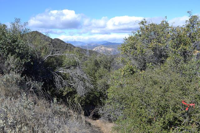 trail top