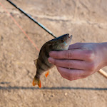 20160130_Fishing_Ostrog_012.jpg