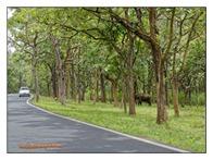 _P6A4841_www.keralapix.com_Mudumalai Bandipur Forest Road