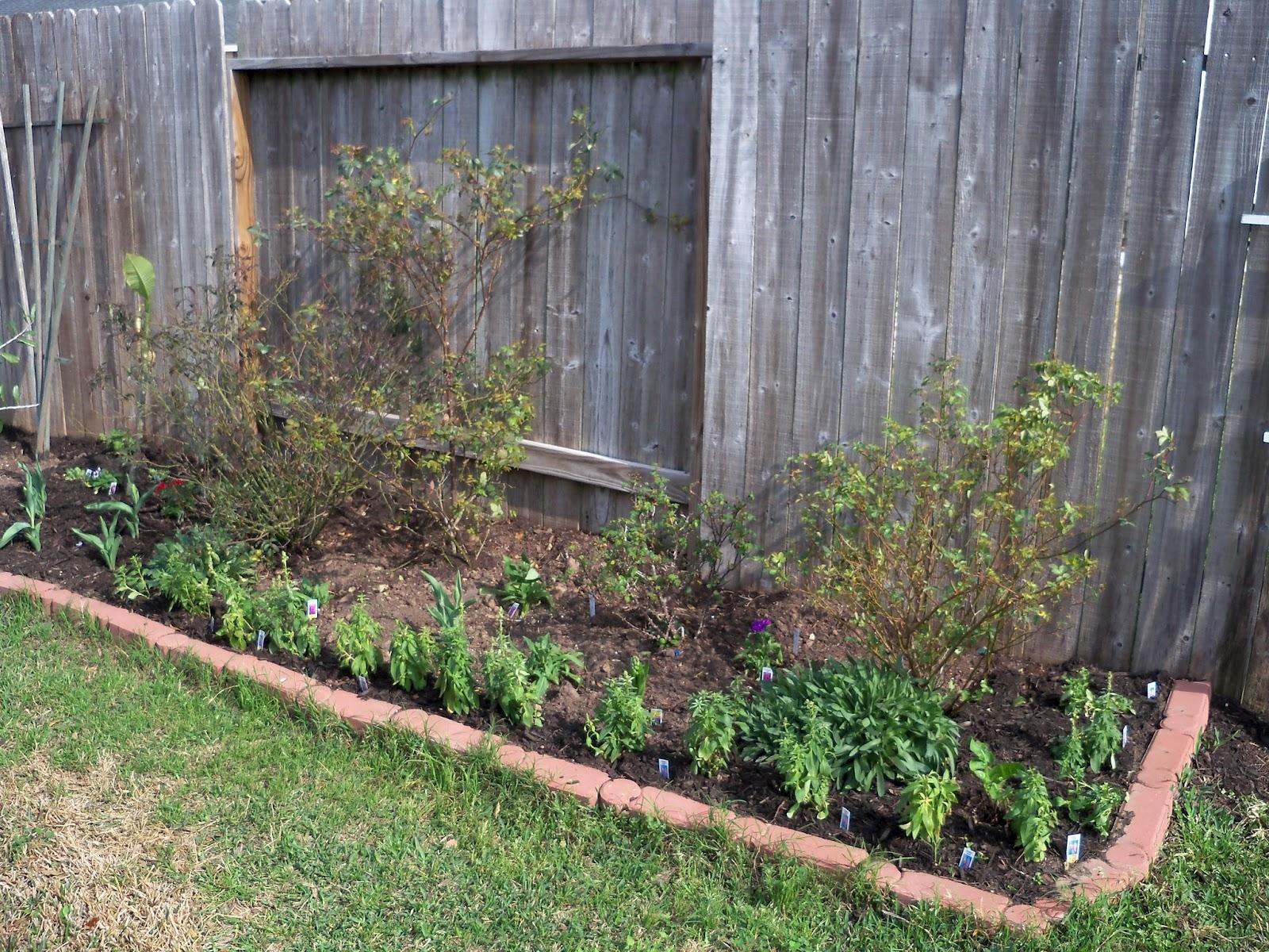 Gardening 2011 - 100_6614.JPG