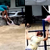 VÍDEO: PESSOAS SÃO ARRASTADAS PELA ÁGUA DA CHUVA E AV. TORQUATO TAPAJÓS ALAGADA