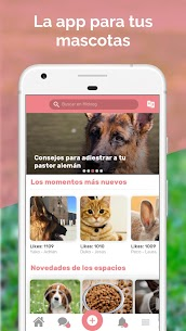 Midoog – La app de tu mascota 1