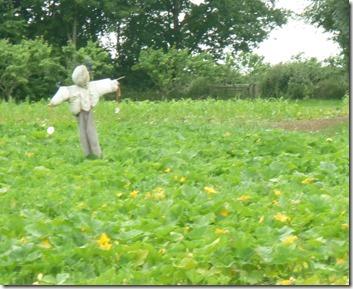 1 scarecrow forge farm