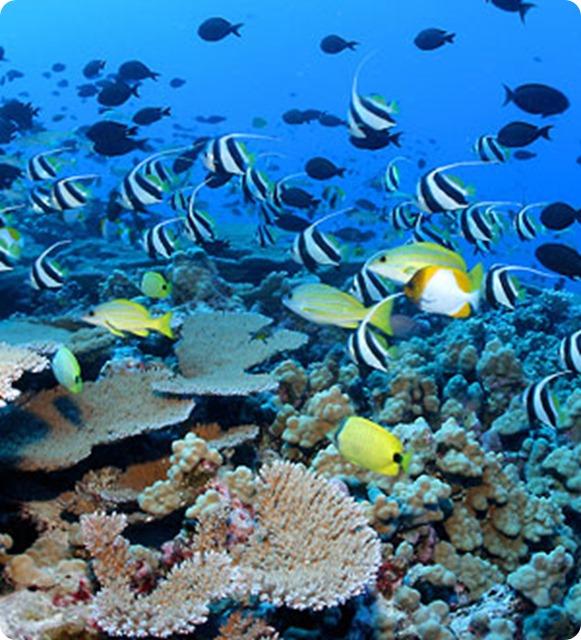 biodiversita_fish