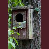 birdhouse_MG_8730-copy.jpg