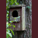 birdhouse_MG_8730-copy.jpg