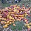 12 Fave di cacao tradizionale.jpg