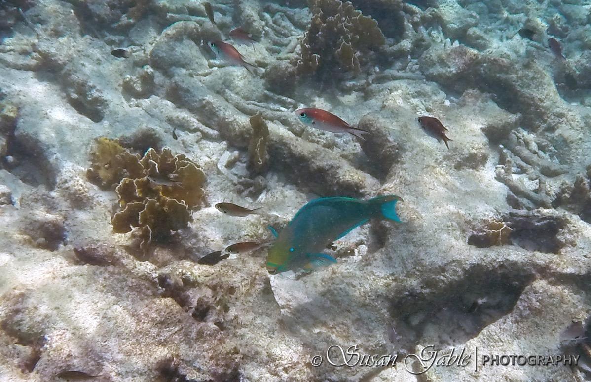 Bonaire GOPR0551