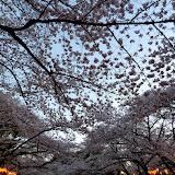2014 Japan - Dag 1 - mike-P1050480-0016.JPG