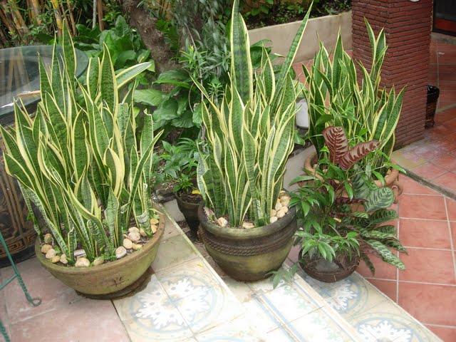 Grow Fresh Air Plants - DSCN0317.JPG