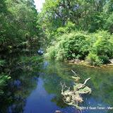 04-04-12 Hillsborough River State Park - IMGP9661.JPG