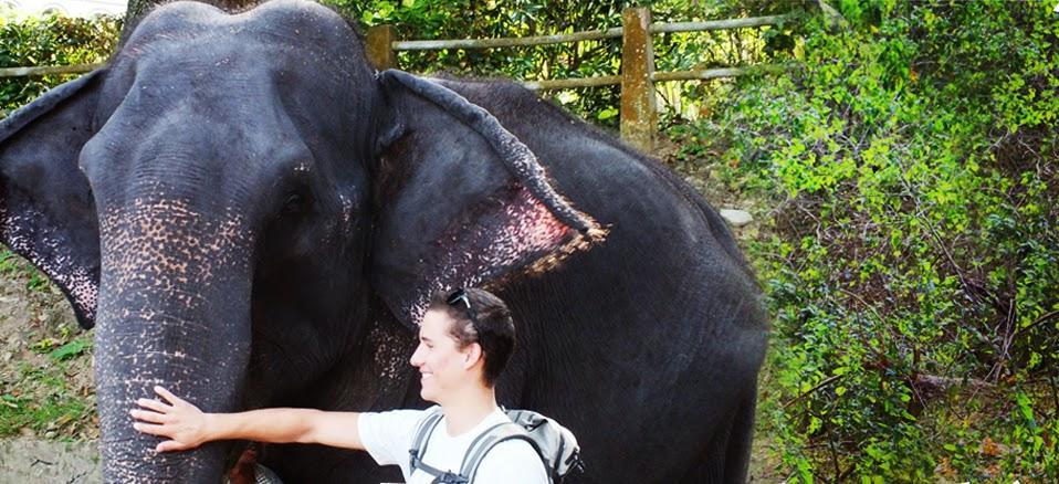 Elephants of Udawalawe slideshow