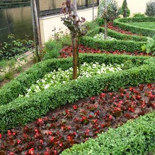 Grădină cu borduri decorative din plante