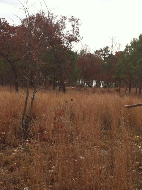 Hunting Habitat 5, Anderson Creek